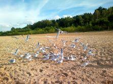 34 La plage Jelitkowo.