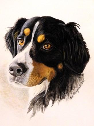 """""""Gunnison."""" Watercolor Pet Portrait"""