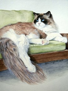 """Libby"" Lounging persian"