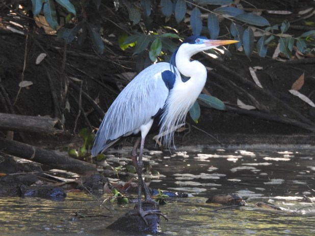 A4 - Garça - Biólogo Marcelo R.F. de Oliveira, Parque Ecológico Baguaçu 2 de julho
