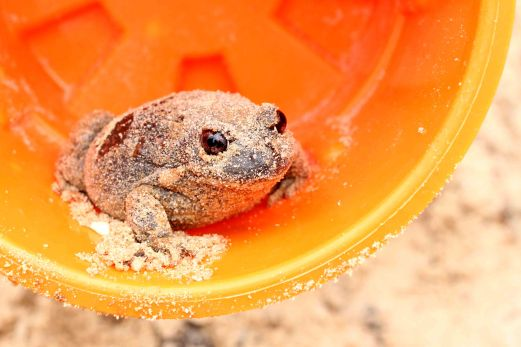 Stranger: I'm a bit funny about including photos on this blog of people without their permission, until we found this guy lurking in our sandpit! I didn't ask him for permission as we promptly relocated him to a more suitable location!