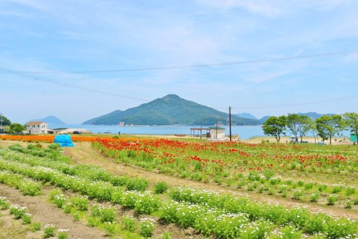 Flower_Park_Urashima (15)