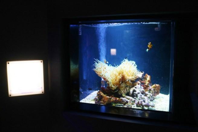 Shikoku_Aquarium (11)