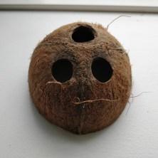 Kokosnød med 3 huller til glasrør fra vanilje stænger