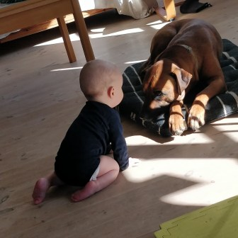Buster og Thor