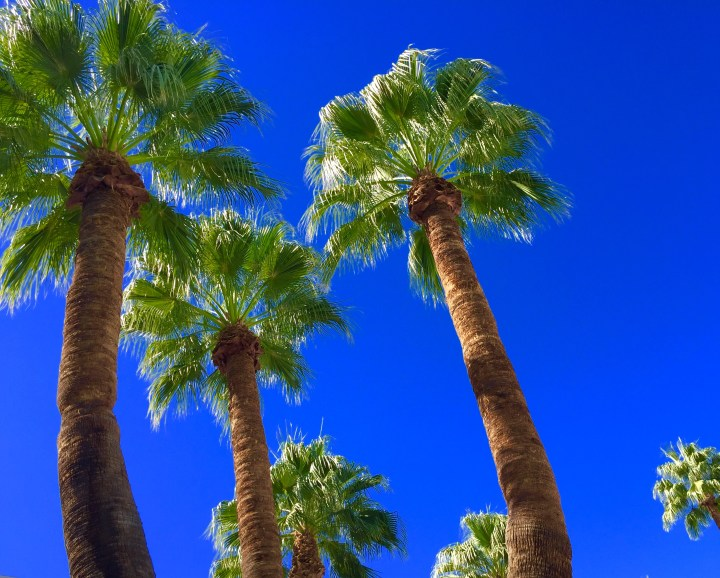 The palms. Toujours, the palms. From sea level.