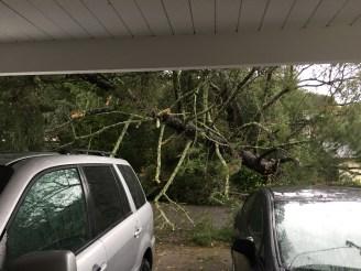 falling-tree-jan-2017-2
