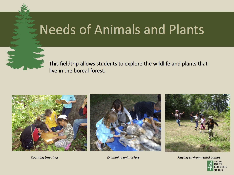 Grade 1 Needs Of Plants And Animals