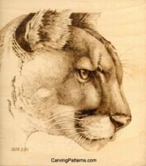 cougar-08