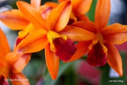 1-FloralFest 2015 130