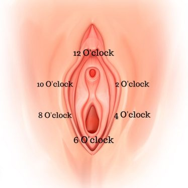 Image of a vulva with the 12, 2, 4, 6, 8, and 10 o'clock position that physiotherapists frequently refer to when discussing the use of dilators.