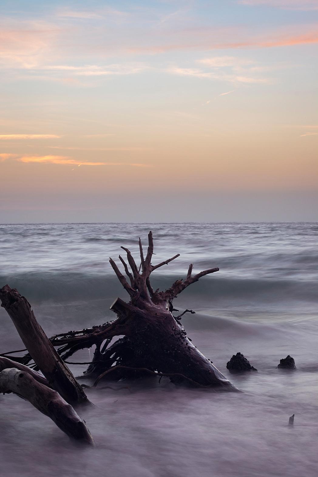 Digitals Florida Film Takeover Driftwood Beach Longboat Key Portrait Photography