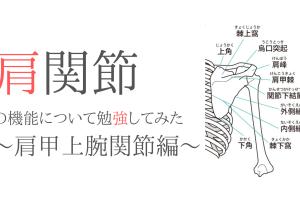 肩関節の機能と解剖について勉強してみた〜肩甲上腕関節編〜
