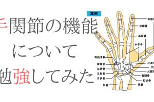 手関節の機能と解剖について勉強してみた