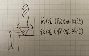 骨盤の前後傾(股関節の屈曲・内旋/伸展・外旋)