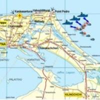 Schwerer Schlag gegen Sea-Tiger - LTTE-Führungskräfte getötet