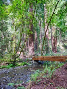HDR automatically created from old pictures of Muir Woods by Google Photos.