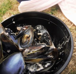 A fresh bowl of mussels
