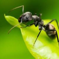 ANT, non si finisce mai di imparare