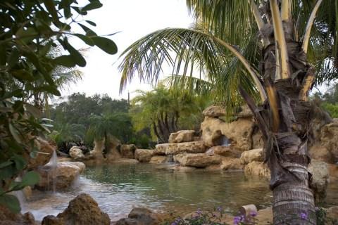 Coconuts hang over a limestone lagoon