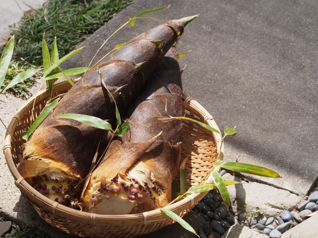 竹の子 取り 方