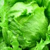 レタスが苦い原因と苦味の取り方 おすすめの食べ方をご紹介