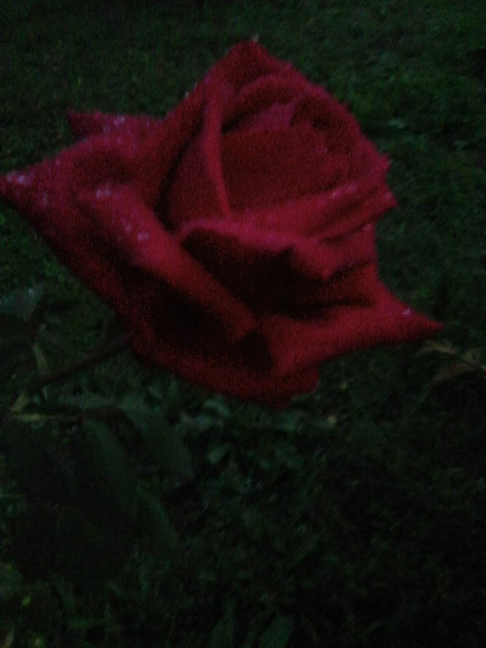 https://i2.wp.com/lucedeitarocchi.com/wp-content/uploads/2019/12/luce-dei-tarocchi-amore-magia-rito-riti-cuore-esoterica-innamorare-nodi-bambola-medium-scopo-sofferenza-aiuto-tradisce-incantesimo-legamento.jpg?resize=960%2C1280&ssl=1