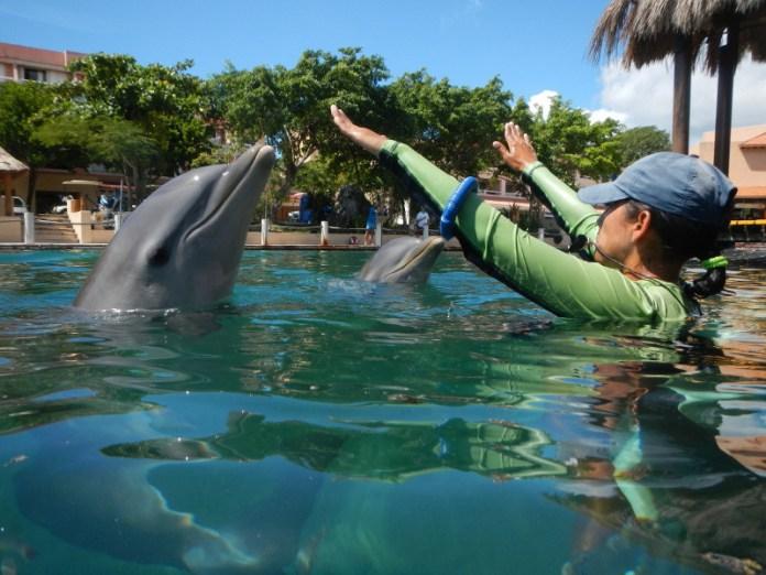 Desmiente Dolphin Discovery contaminación