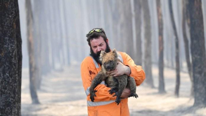 Peligran 49 especies en Australia por grandes incendios