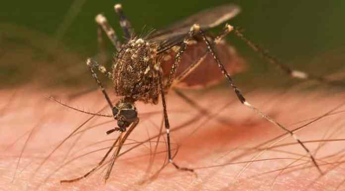 El zika llega a Quintana Roo