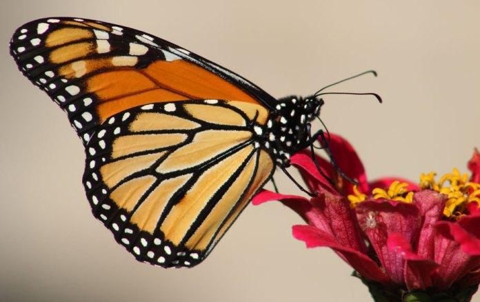 Respeta el paso de la monarca