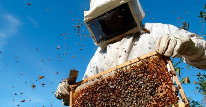 Alertan falta de acciones en apicultura