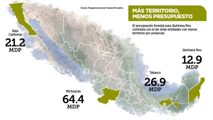 Castiga federación zona forestal en QR