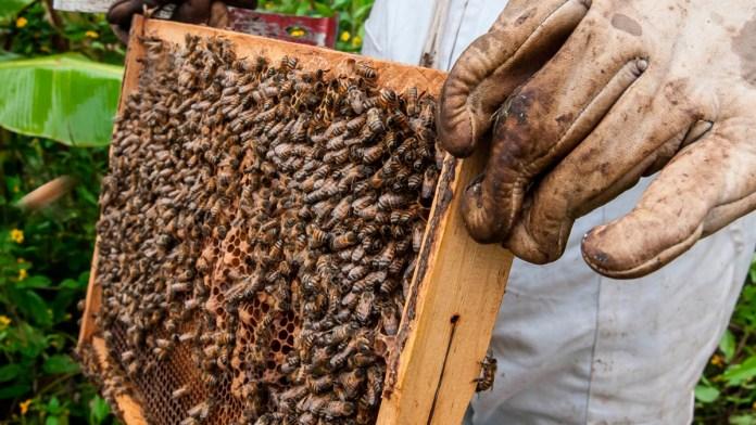 Sí hay apoyo a apicultura, afirma Sedarpe
