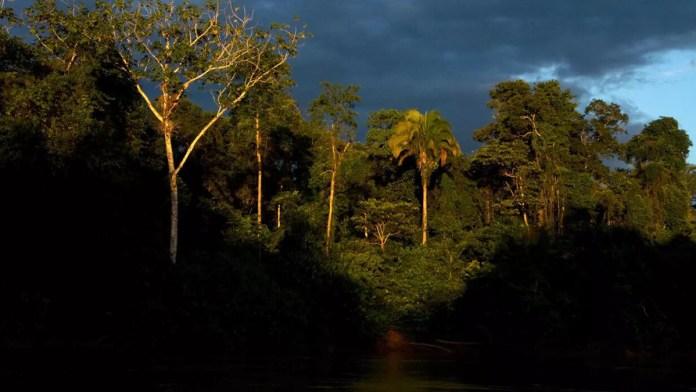 Más de 10 mil especies peligran en la Amazonia