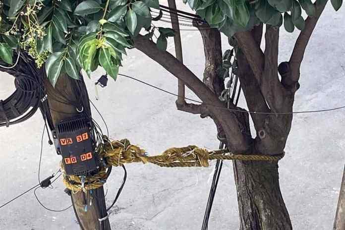 Amarran poste a árbol para que no se caiga en Benito Juárez