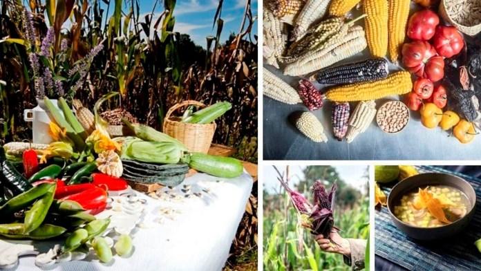 La milpa, un pilar de la alimentación mexicana