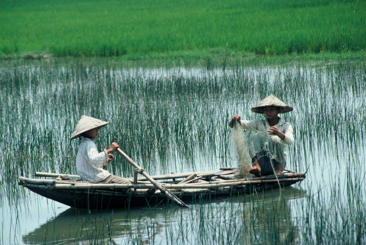Floating Rice – Lessons from the Mekong