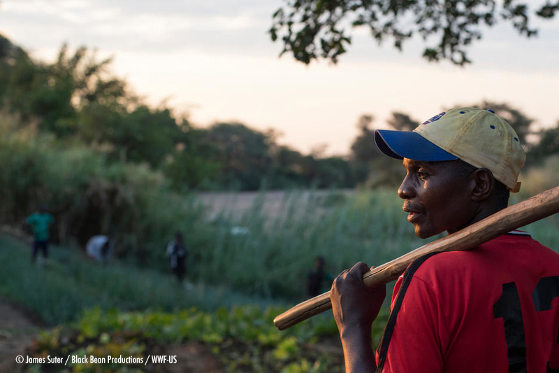 What will it take to transform African agricultural policy?