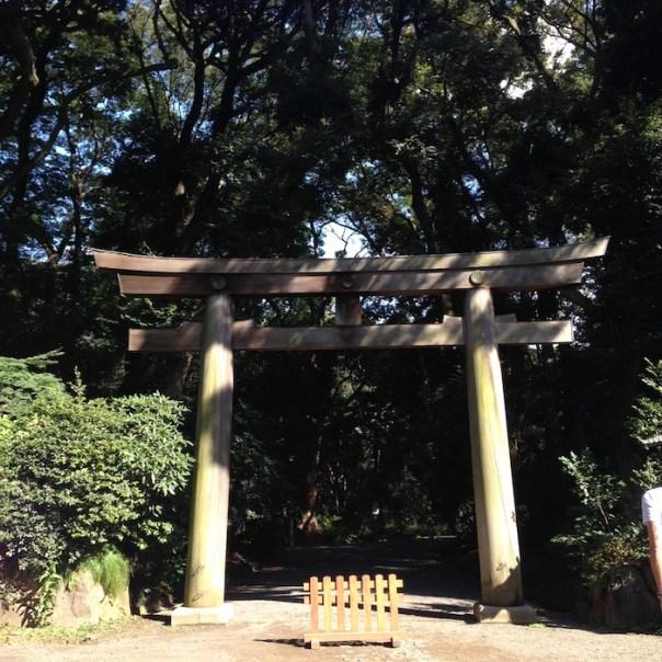 Dicas de Tóquio - viagem para o Japão - shinjuku gyoen 2
