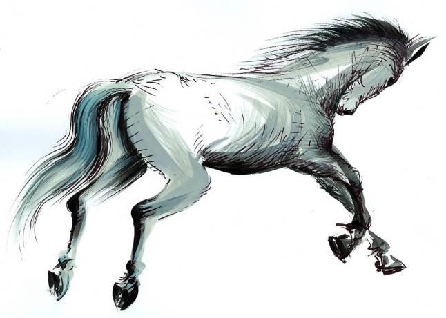 Calul - ilustratie de George Romila