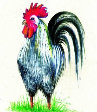 Cocosul - ilustratie de George Romila