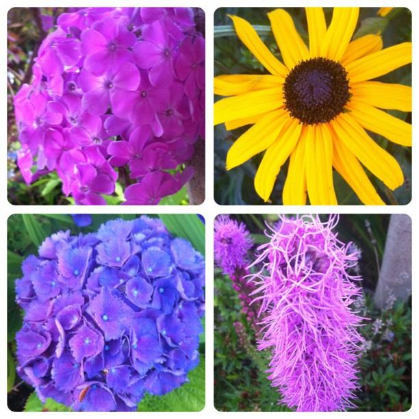 More beautiful flowers from neighbourhood