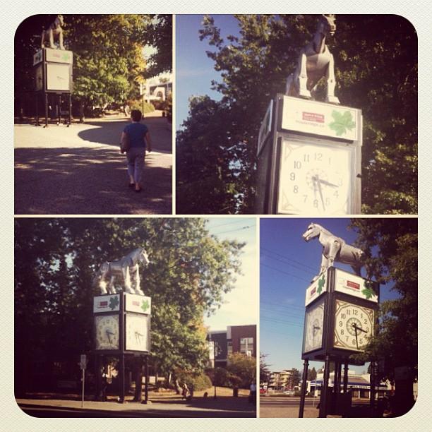Iconic Maple Ridge Downtown Beast Horse Clock