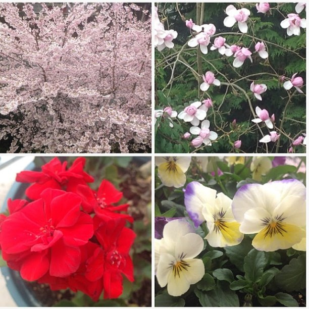 Rosy's spring flowers - Part 1
