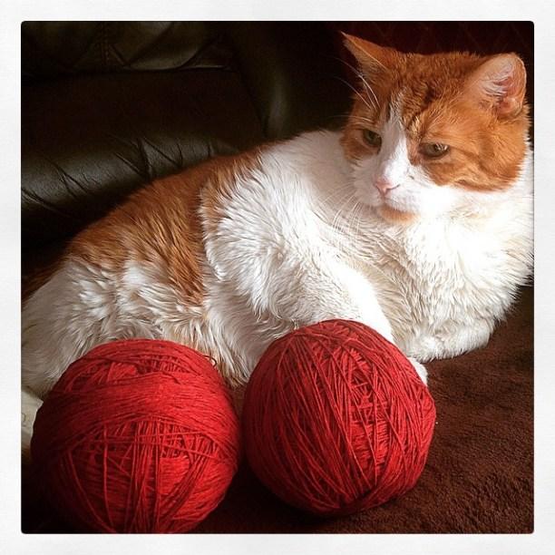 Mr. Tom and the crochet kit