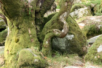 Gnarled and twisted