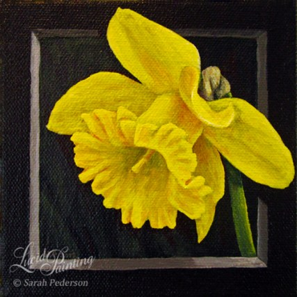 A single yellow daffodil appears to be framed and overlaps part of the frame.