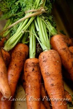 Bodnant Carrots lucinda price