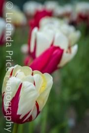 springFlowers-3